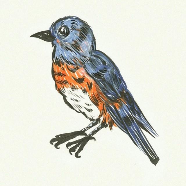 Sabines Bird