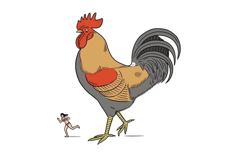 Cockerel Illustration by Matt Blease