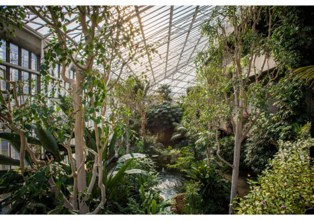The Barbican Conservatory – A Series on Unusual Artistic Venues.