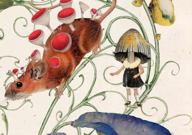 Neal Murren illustrates 'Mushrooms and Toadstools' book cover